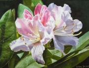 Realistic Rhododendron painting in watercolor : Create beautiful dark colour mixes in watercolor