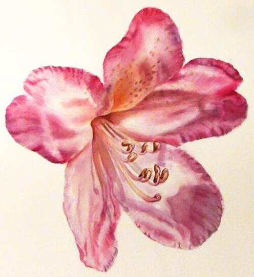 Watercolor Video Lesson on how to paint the undulations on Rhododendron petals