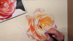 painting the glowing orange rose - each step is explained - watercolor dvd and online video lesson