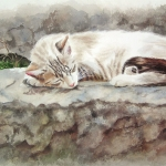 White grey cat laying on warm stones in France - Watercolor Cat Painting