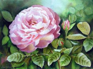 Beautiful Pink Rose Garden Painting in Watercolor