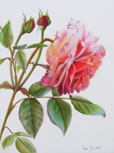 Botanical Rose Painting of a pink glowing rose in watercolor