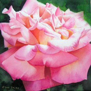 Single Rose Painting in pink on watercolor canvas with many petals - Rose Painting