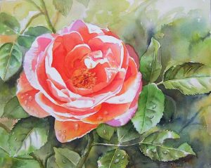 Stunning garden rose with atmosphere painted in watercolor