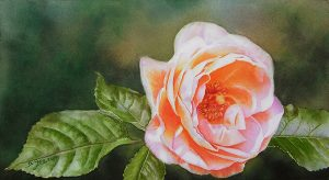 Glowing orange rose painted as a watercolor lesson on dvd instruction in watercolor