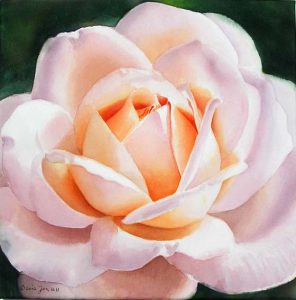 Portrait of a stunning beautiful peach and white coloured rose - Rose Painting in Watercolor