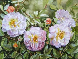 Roses - full blooms with buds and many leaves and background painted on canvas in watercolor