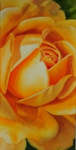 Close up of the beautiful David Austin Rose Golden Celebration on canvas, Watercolor Rose Painting