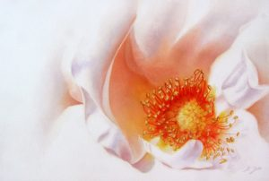 Elegant white Rose Painting, close up of the inner beauty with stamens in watercolor - painted roses