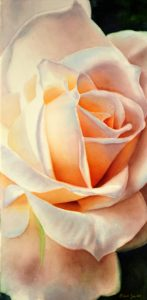 Stunning realistic white Rose Painting in Watercolor
