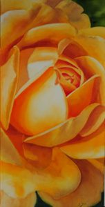 Close up of a beautiful yellow Rose Painting of DAvid Austin's Rose Golden Celebration in watercolor