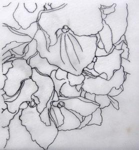 Drawing Hydrangea