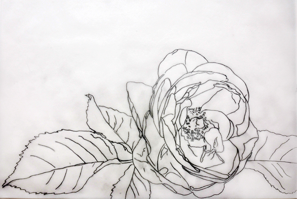 Drawing of the glowing orange rose for watercolor dvd and online painting lesson