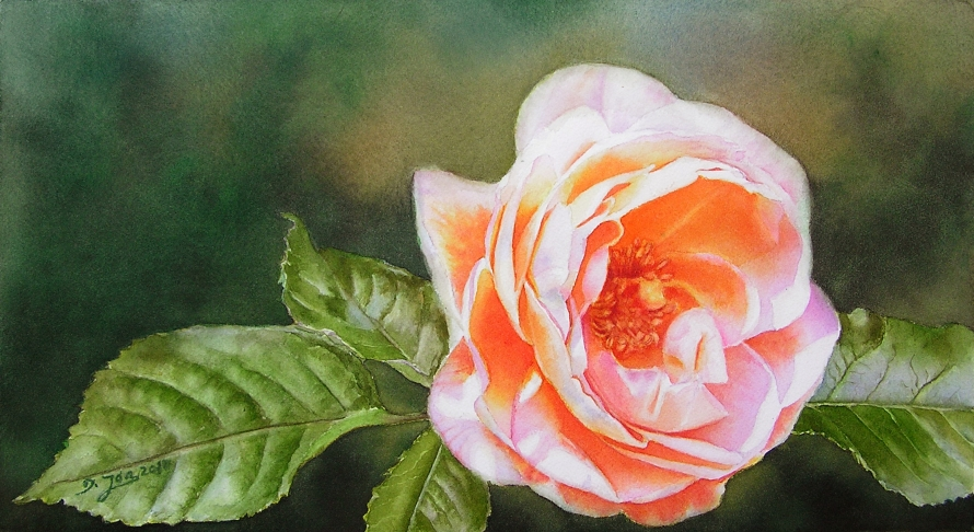 finished painting of the glowing Rose Bonita Renaissance with atmospheric background for the watercolor dvd and online video lesson