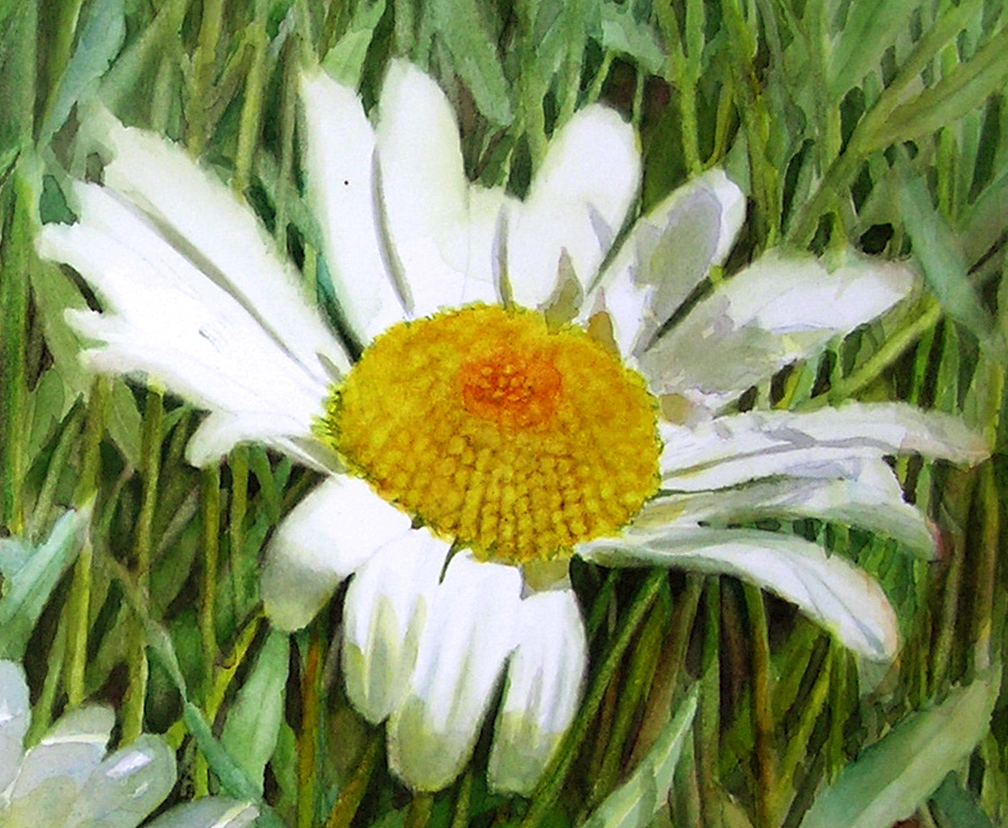 Center of a white realistic daisy as watercolor dvd and online lesson