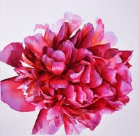 How to paint flowers - WIP of a Pink Peony Flower Painting by Doris Joa in watercolor