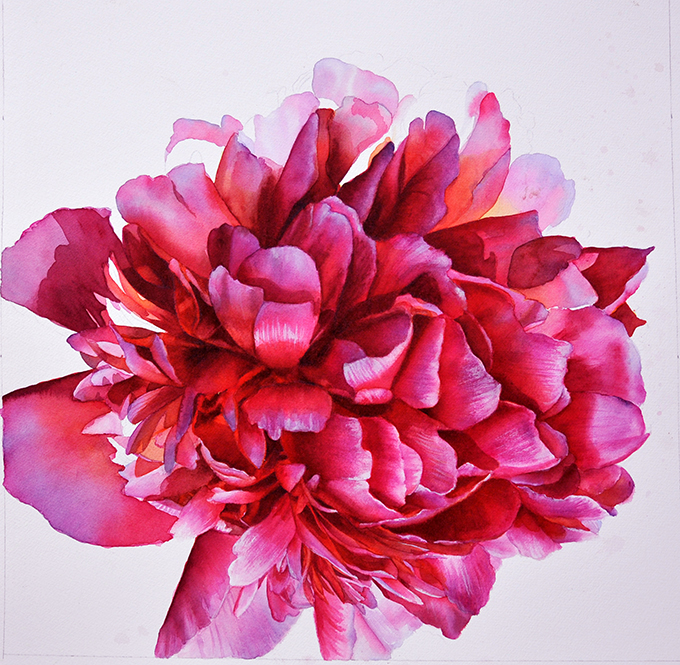 Work in Progress of a pink purple Paeony Flower Painting in Watercolor by Doris Joa
