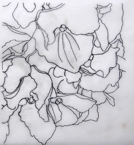 Drawing Hydrangea for watercolor online lesson and watercolor dvd
