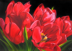 Painting of Red Tulips in oil on canvas. Tulips are fun to paint. Be careful with creating your composition. Try to make one main flower the star of your painting composition.