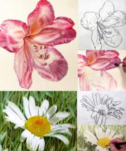 Video Online Lesson - paint a pink rhododendron and a white daisy - learn online