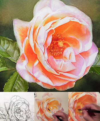 Video Online Lesson on how to paint a glowing Renaissance Rose - Rose Bonita in watercolor