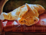 red cat with soft fur laying on a red chair seat