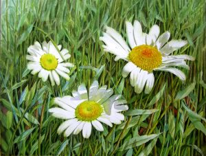 Painting of white realistic daisies in watercolor