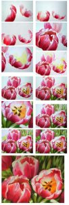 How to paint tulips in watercolor or oil