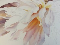 How to paint flowers - make your flowers glowing - Work in progress of a white peony in watercolor by Doris Joa