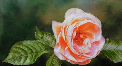Rose Bonita Renaissance- Rose Painting in Watercolor