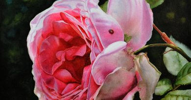 Rose with Ladybug - Pink Rose Painting - Watercolor painting of realistic roses by Doris Joa