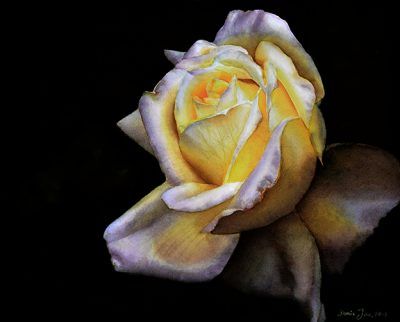 Rose Elfe - realistic watercolor rose painting