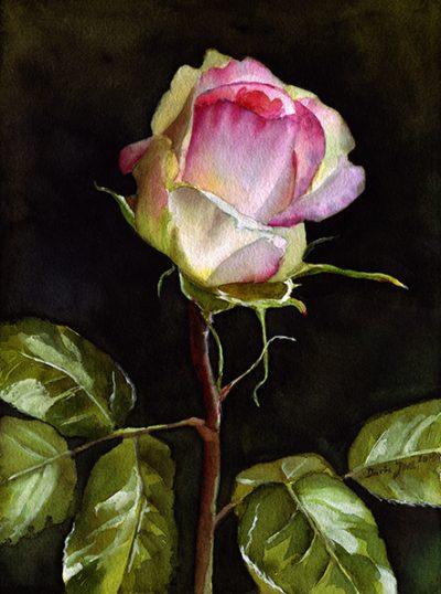 Roses in watercolor - Eden Rose bud painting