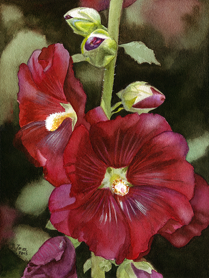 Realistic red hollyhock flower painting in watercolor