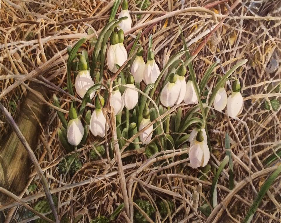 Snowdrops - Realistic flower watercolor painting by Doris Joa