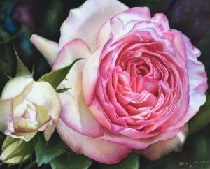 Eden Rose - Pierre de Ronsard - Watercolor Painting