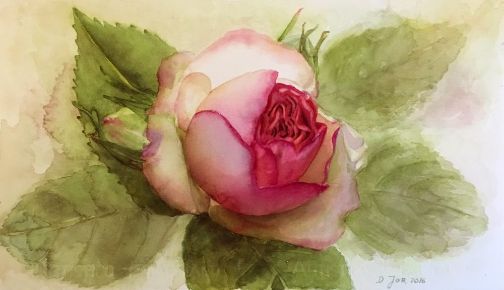 Eden Rose in watercolor - Pink Rose Painting