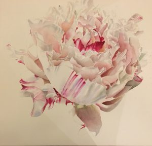 Pink White Paeony Flower Painting - work in progress