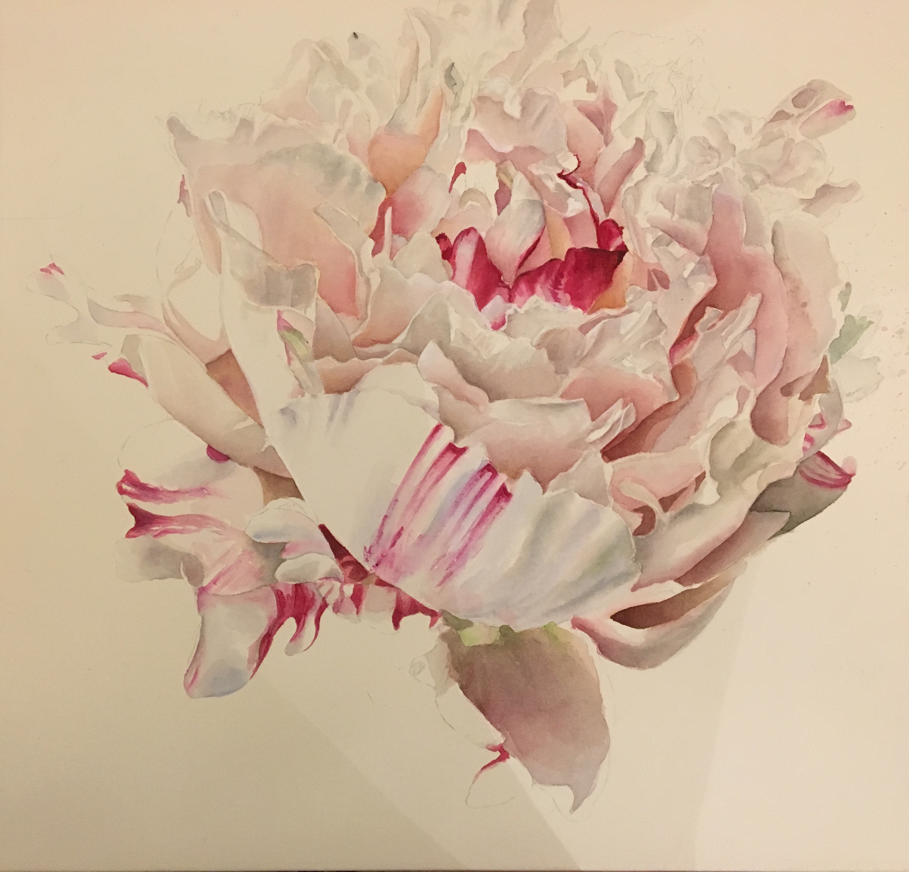 Pink White Paeony Painting - work in progress