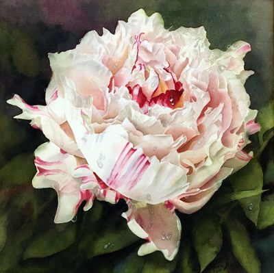 Paeony Flower Painting in watercolor by Doris Joa in white and pink