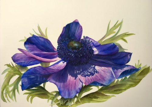 Blue Anemone Flower Painting in watercolor