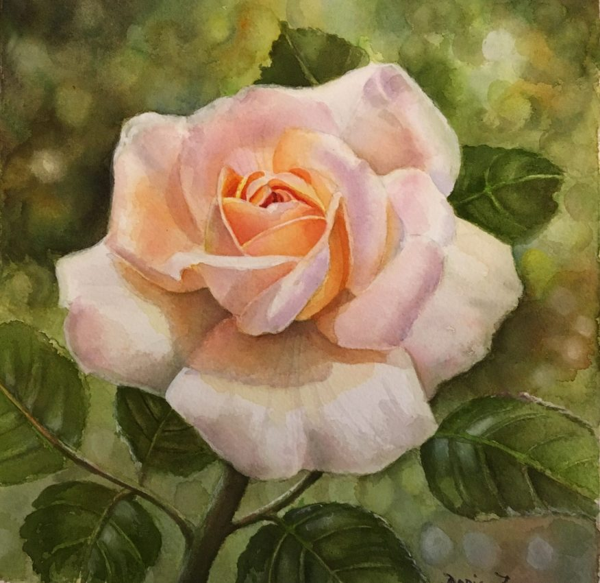 Apricot Rose Painting in watercolor