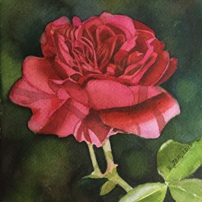 Small red rose painting in watercolor