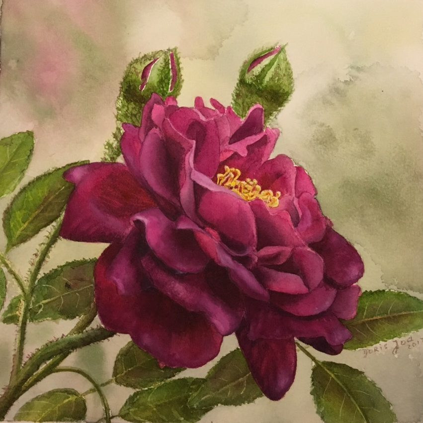 Purple Rose – New Painting Series of Rose Paintings in Watercolor