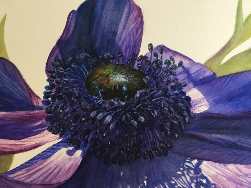 detail of blue anemone flower painting in watercolor