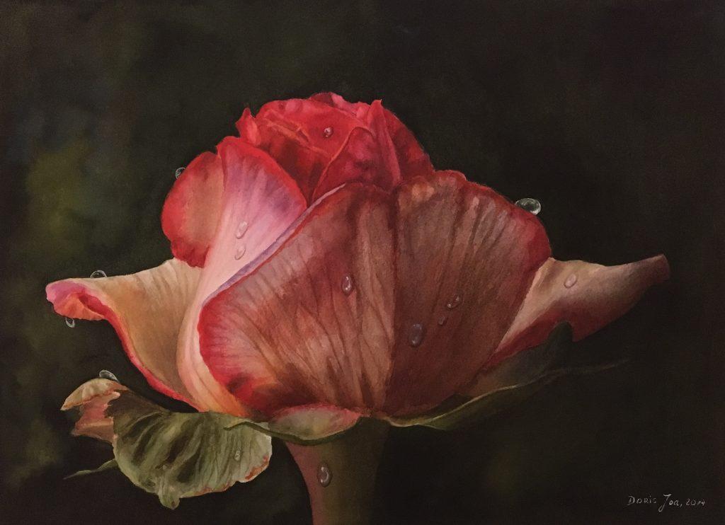 Original rose paintings in watercolor