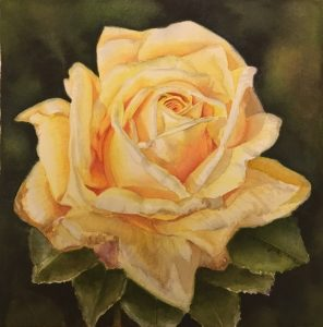 Yellow Rose painting in watercolor - Flower Painting