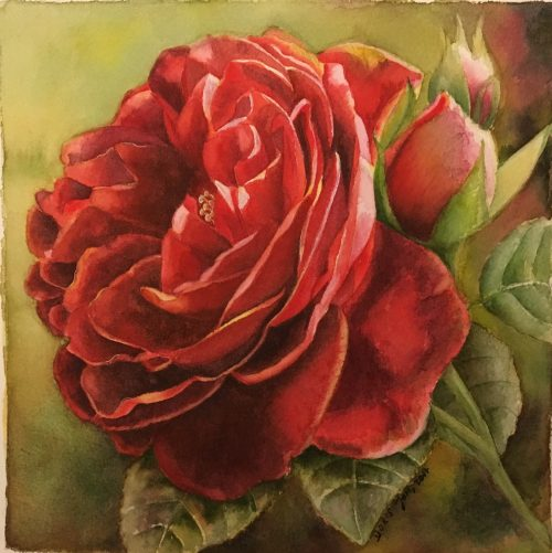 Red Rose Flower Painting in watercolor
