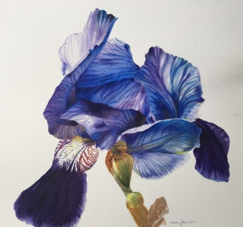 Blue Iris Flower Painting in watercolor