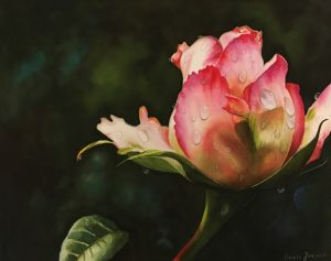 Pink rose bud flower rose painting in watercolor